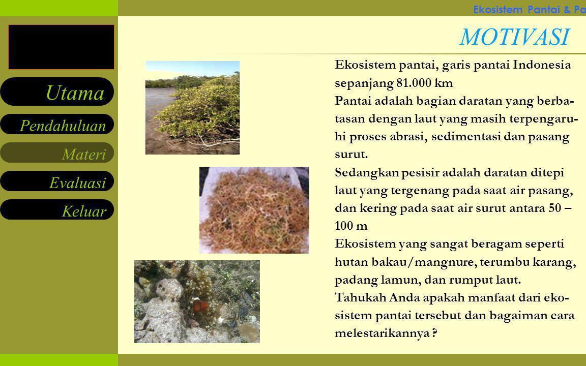 Ekosistem Pantai & Pantai Pesisir