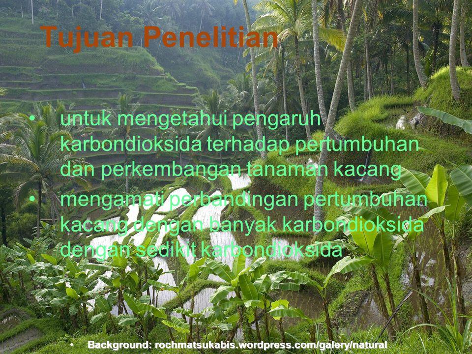 Tujuan Penelitian untuk mengetahui pengaruh karbondioksida terhadap pertumbuhan dan perkembangan tanaman kacang.