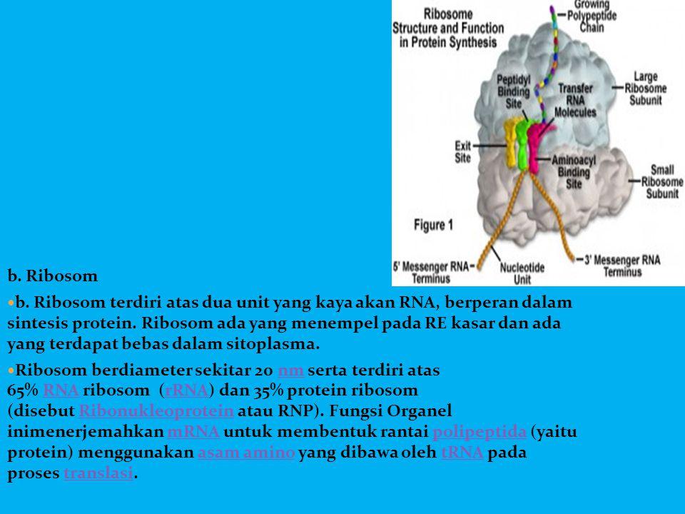 b. Ribosom