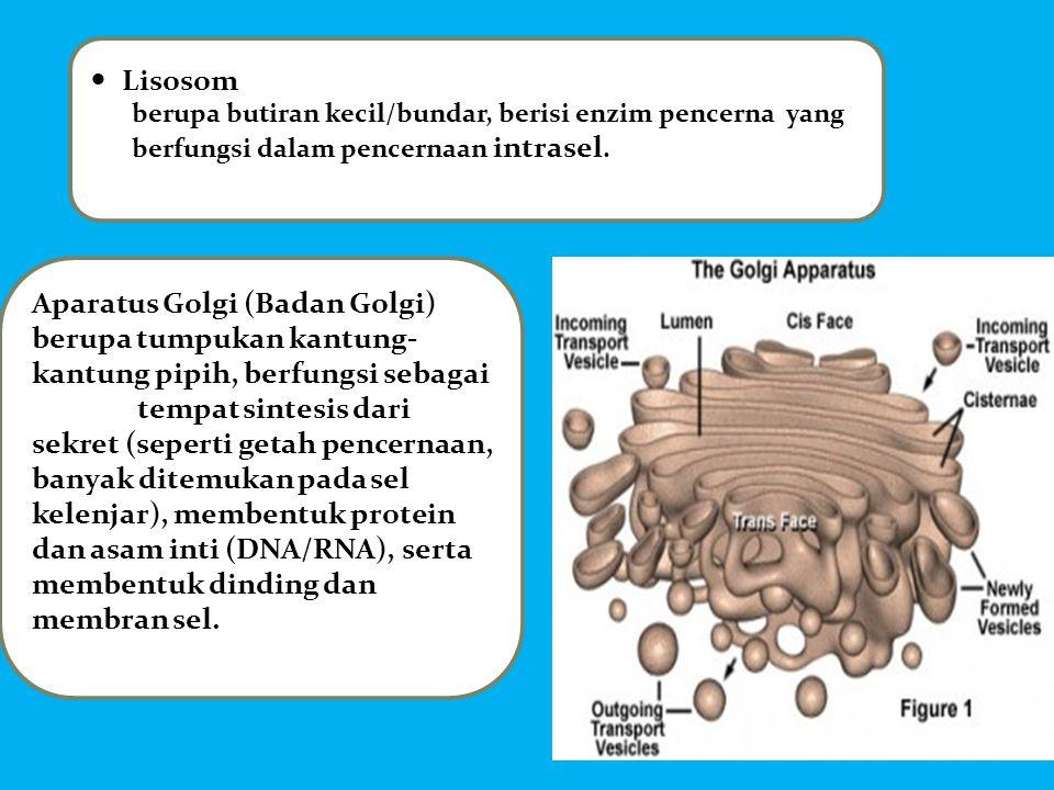 Aparatus Golgi (Badan Golgi)