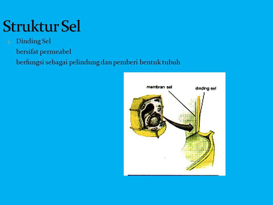 Struktur Sel Dinding Sel bersifat permeabel