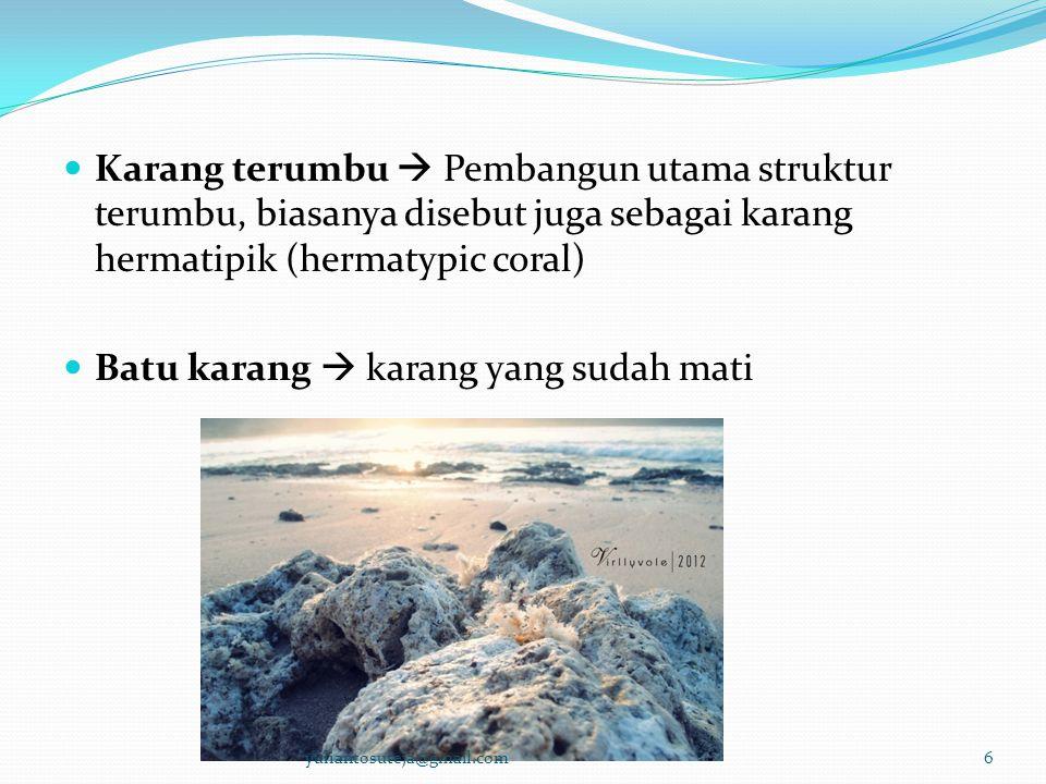 Batu karang  karang yang sudah mati