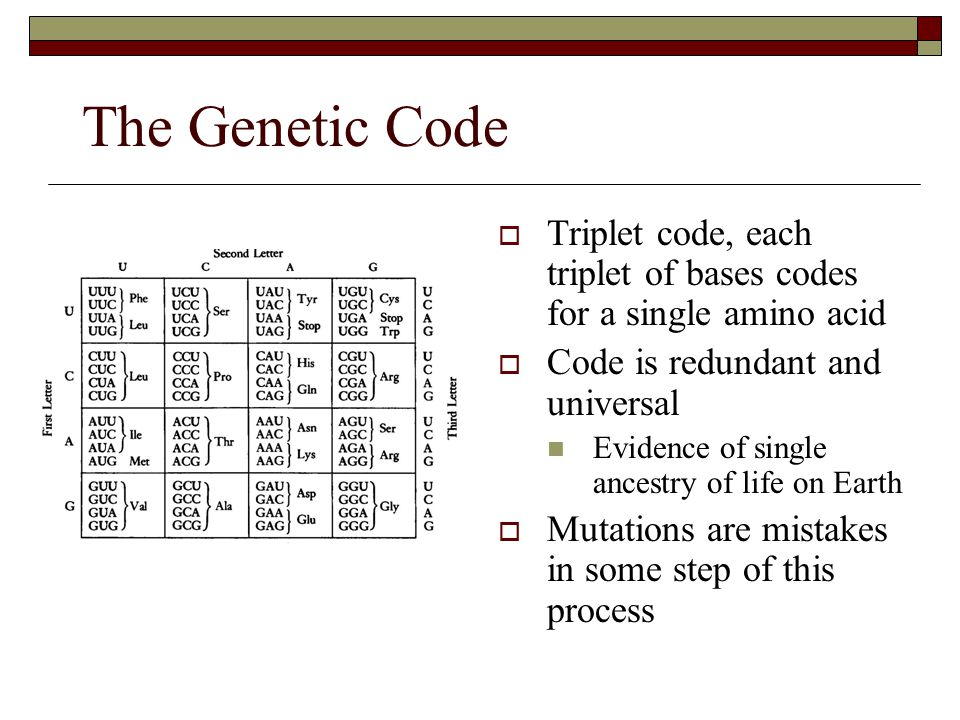The Genetic Code Triplet code, each triplet of bases codes for a single amino acid. Code is redundant and universal.