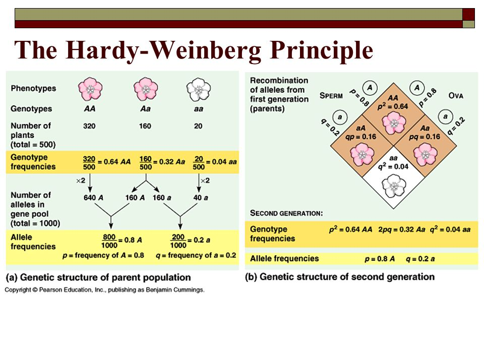 The Hardy-Weinberg Principle