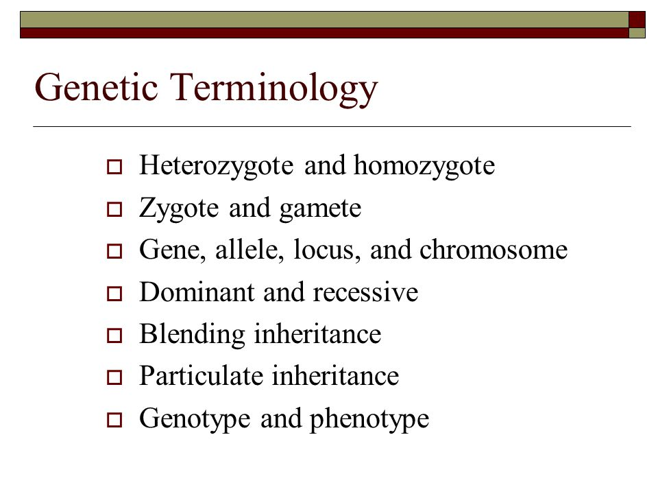Genetic Terminology Heterozygote and homozygote Zygote and gamete
