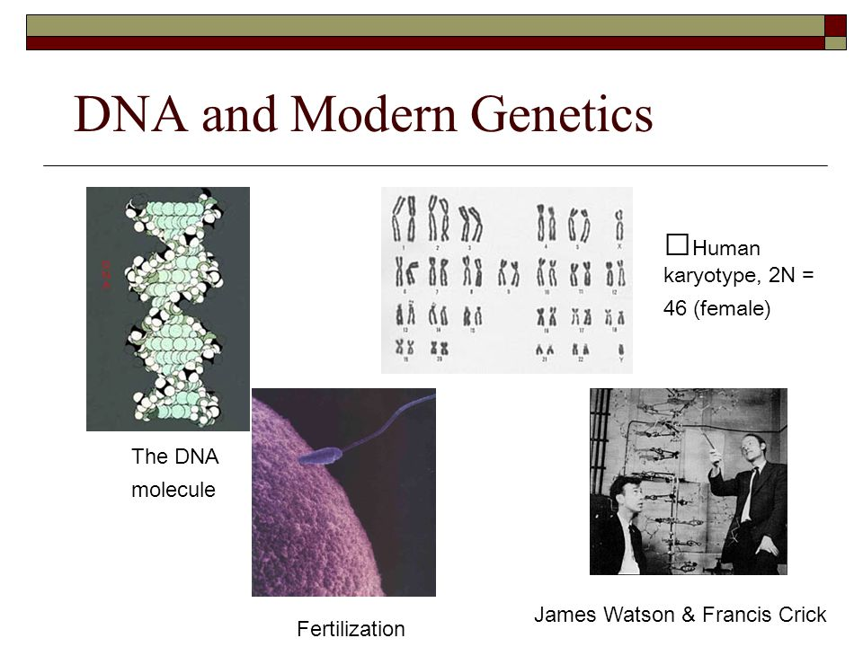 DNA and Modern Genetics