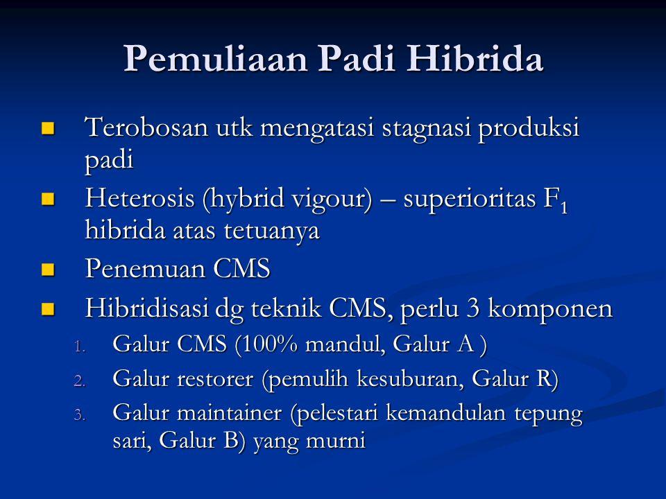 Pemuliaan Padi Hibrida