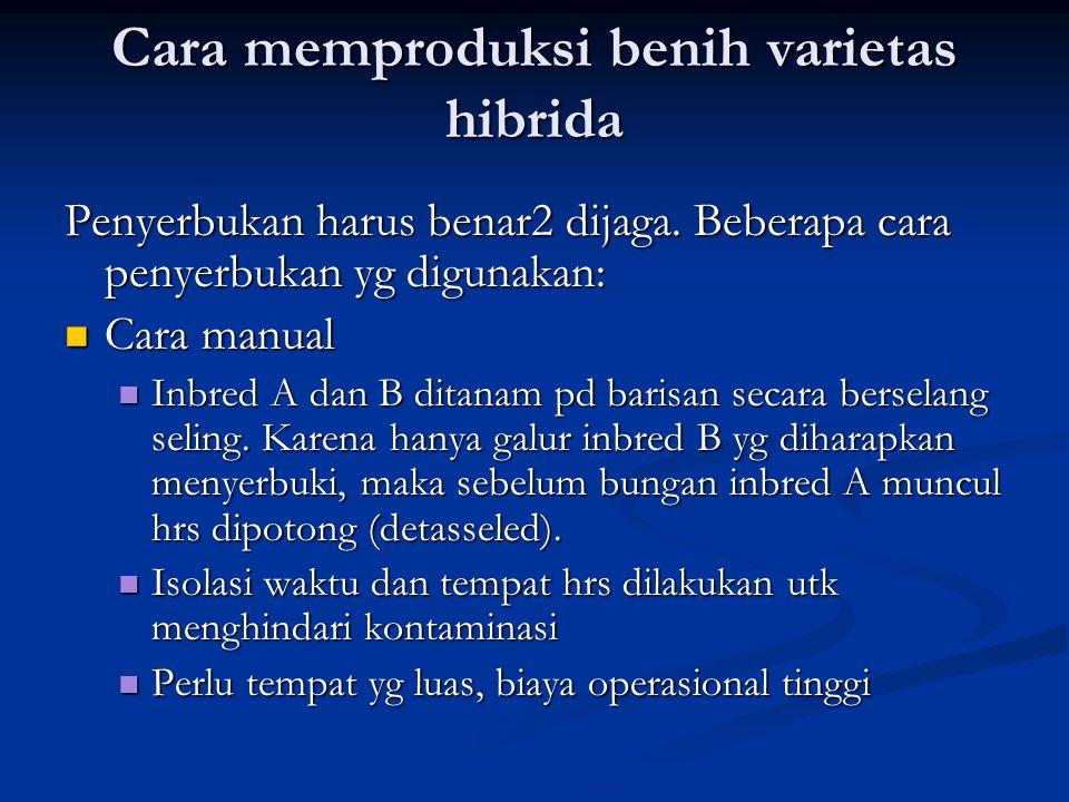 Cara memproduksi benih varietas hibrida