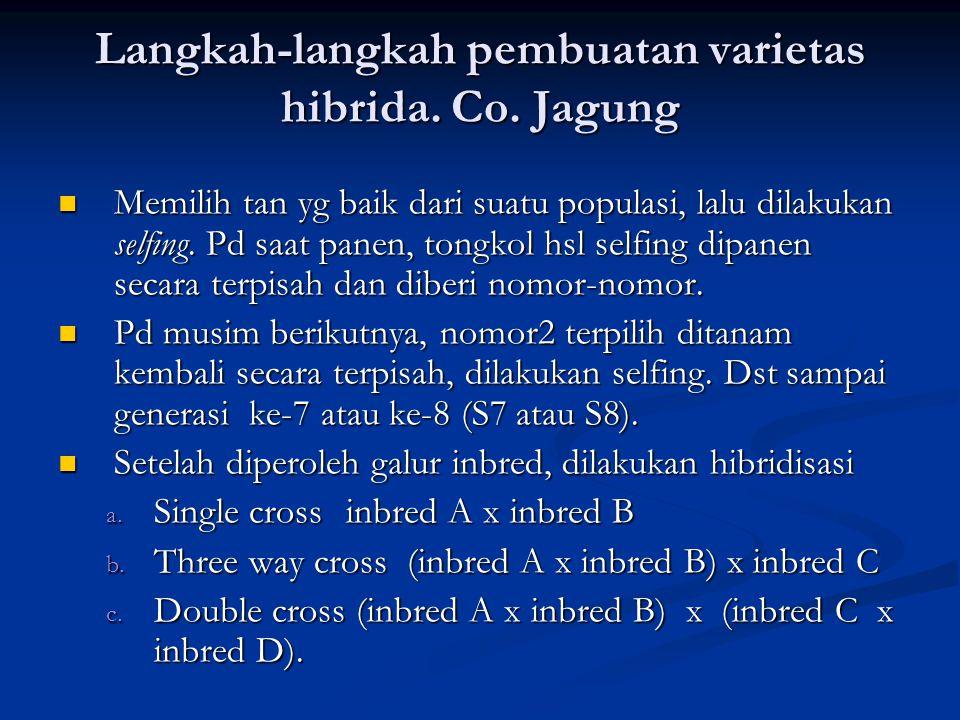 Langkah-langkah pembuatan varietas hibrida. Co. Jagung