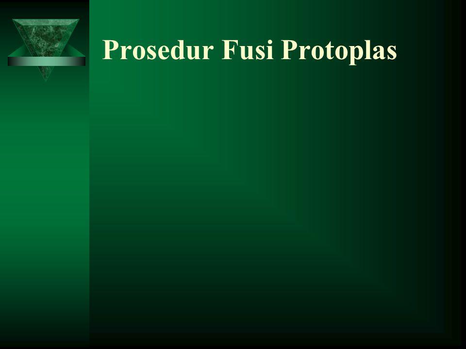 Prosedur Fusi Protoplas