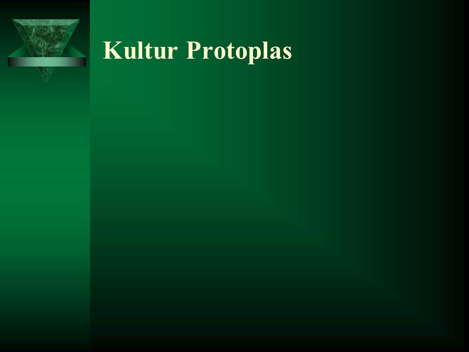 Kultur Protoplas