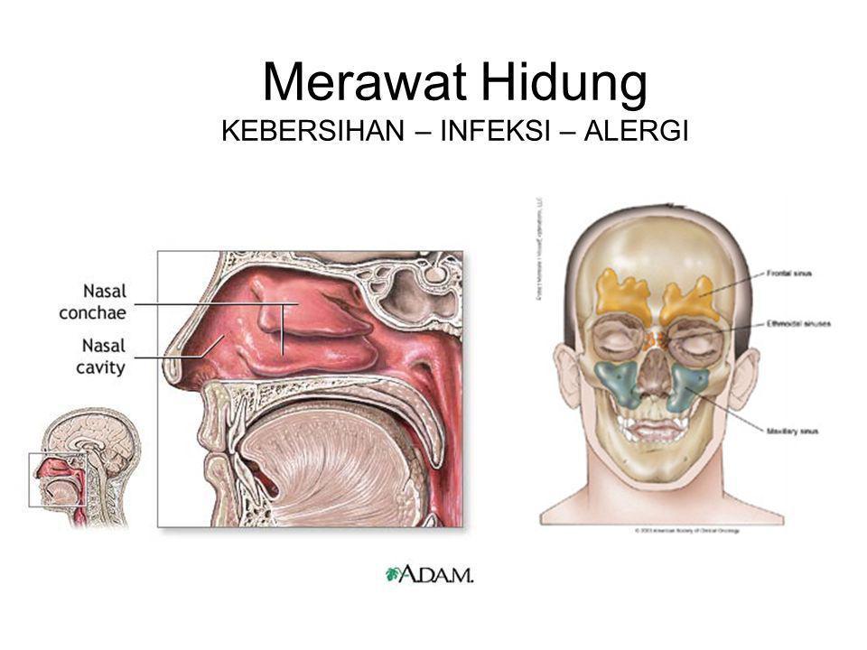 Merawat Hidung KEBERSIHAN – INFEKSI – ALERGI