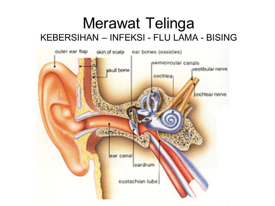 Merawat Telinga KEBERSIHAN – INFEKSI - FLU LAMA - BISING