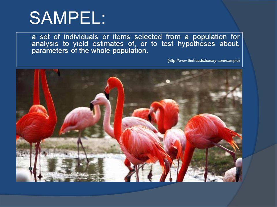 SAMPEL: