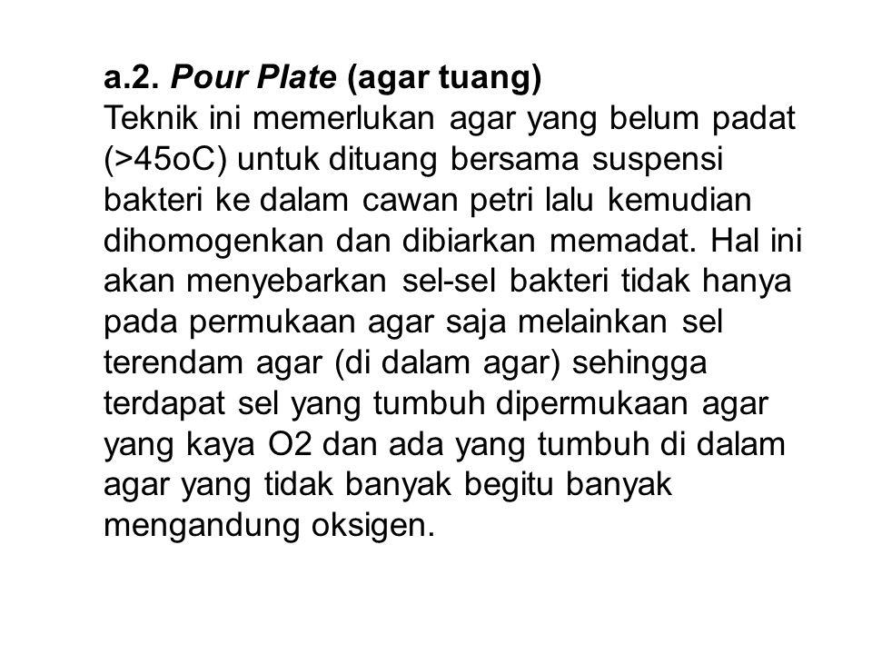 a.2. Pour Plate (agar tuang)