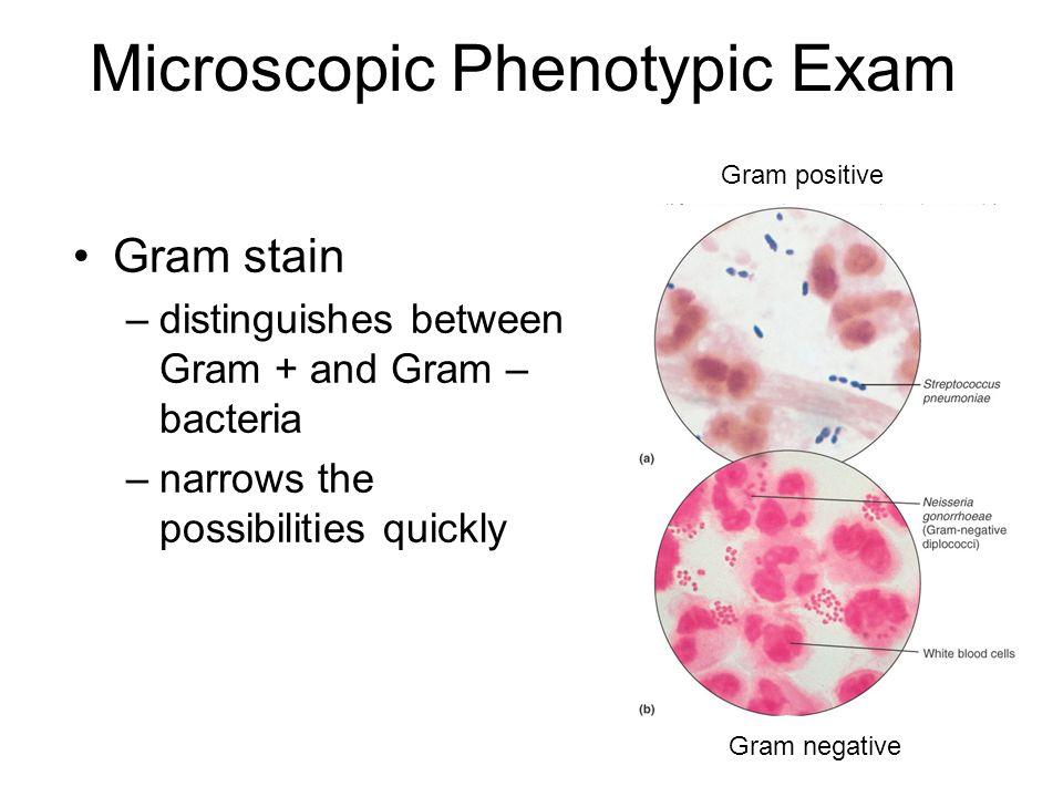 Microscopic Phenotypic Exam