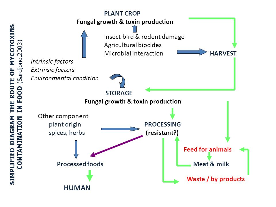 PLANT CROP Fungal growth & toxin production Insect bird & rodent damage Agricultural biocides Microbial interaction HARVEST Intrinsic factors Extrinsic factors Environmental condition STORAGE Other component plant origin PROCESSING spices, herbs (resistant ) Feed for animals Processed foods Meat & milk Waste / by products HUMAN