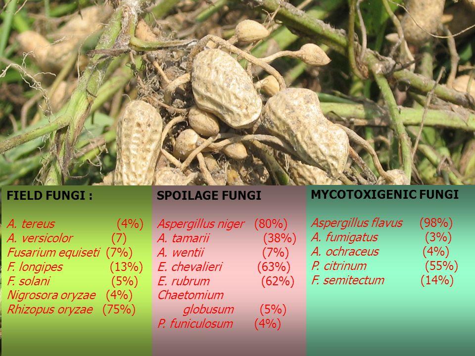 FIELD FUNGI : A. tereus (4%) A. versicolor (7) Fusarium equiseti (7%) F. longipes (13%)