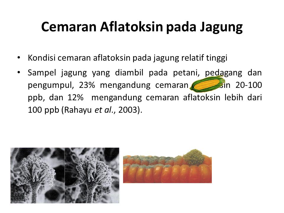 Cemaran Aflatoksin pada Jagung