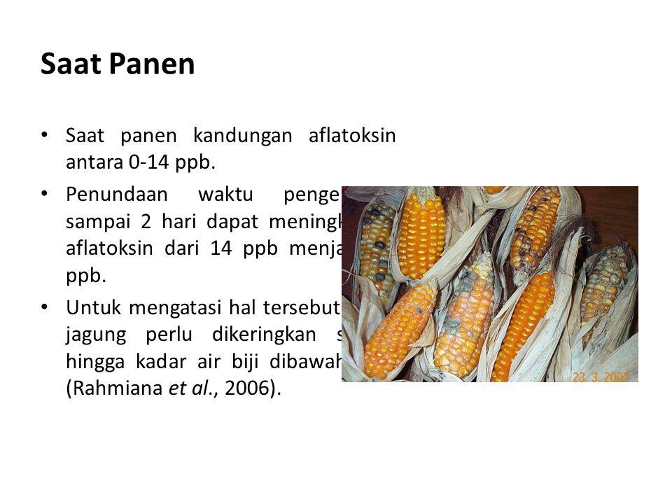 Saat Panen Saat panen kandungan aflatoksin antara 0-14 ppb.
