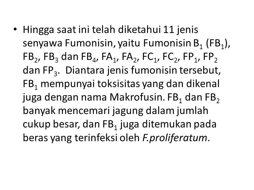 Hingga saat ini telah diketahui 11 jenis senyawa Fumonisin, yaitu Fumonisin B1 (FB1), FB2, FB3 dan FB4, FA1, FA2, FC1, FC2, FP1, FP2 dan FP3. Diantara jenis fumonisin tersebut, FB1 mempunyai toksisitas yang dan dikenal juga dengan nama Makrofusin.