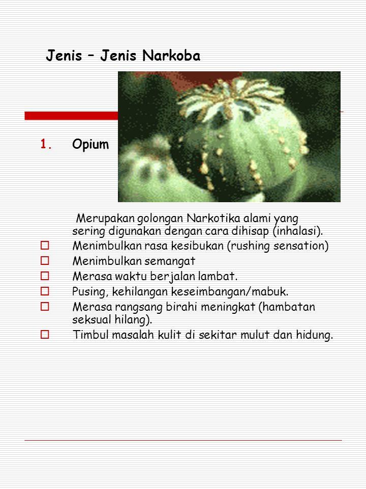 Jenis – Jenis Narkoba Opium