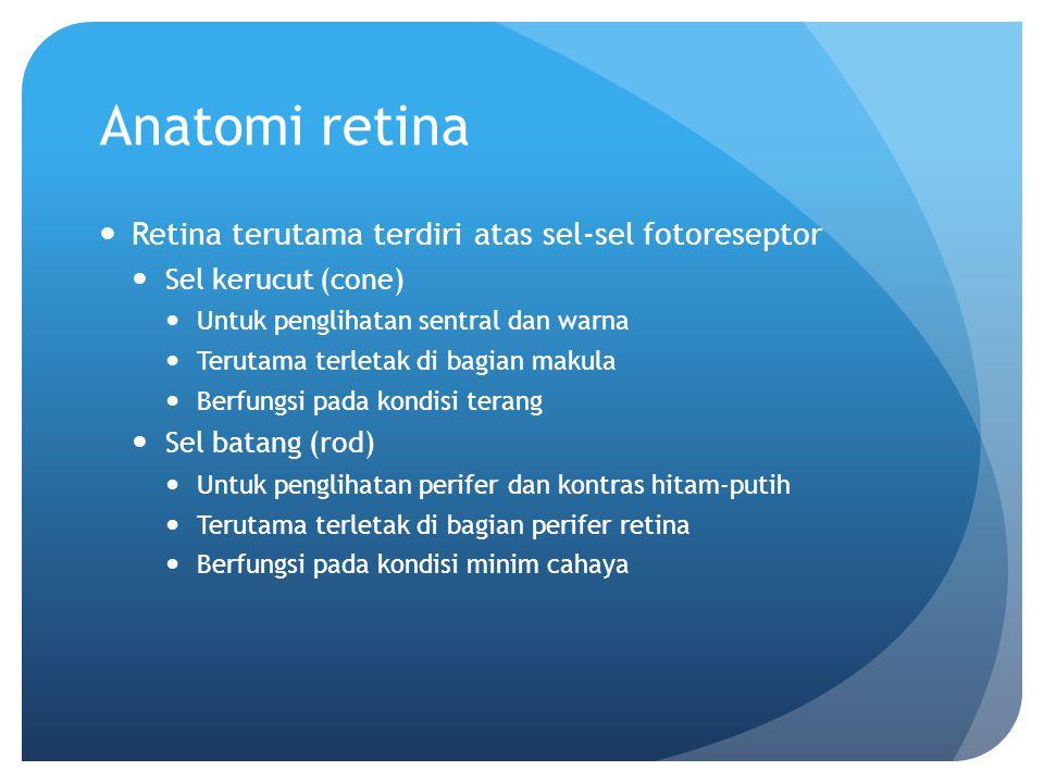 Anatomi retina Retina terutama terdiri atas sel-sel fotoreseptor