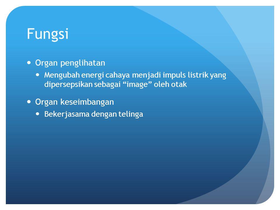 Fungsi Organ penglihatan Organ keseimbangan