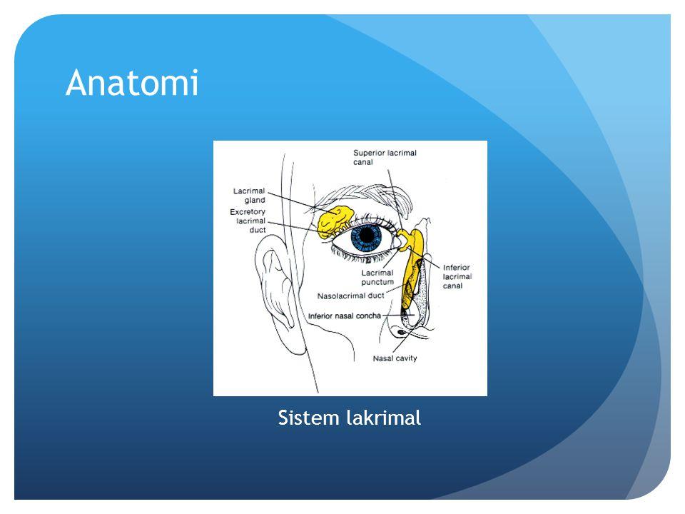 Anatomi Sistem lakrimal