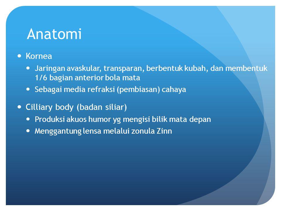 Anatomi Kornea Cilliary body (badan siliar)