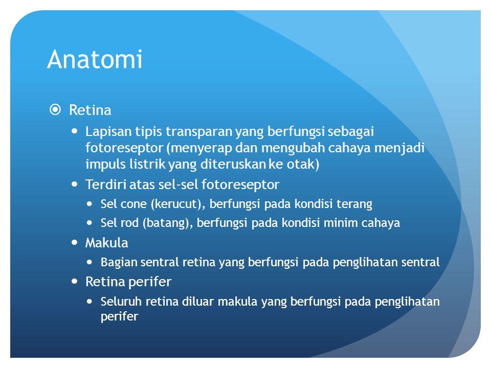 Anatomi Retina.