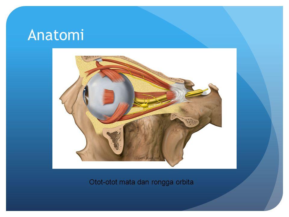 Anatomi Otot-otot mata dan rongga orbita