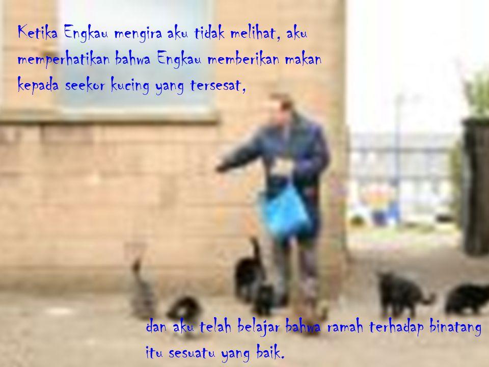 Ketika Engkau mengira aku tidak melihat, aku memperhatikan bahwa Engkau memberikan makan kepada seekor kucing yang tersesat,