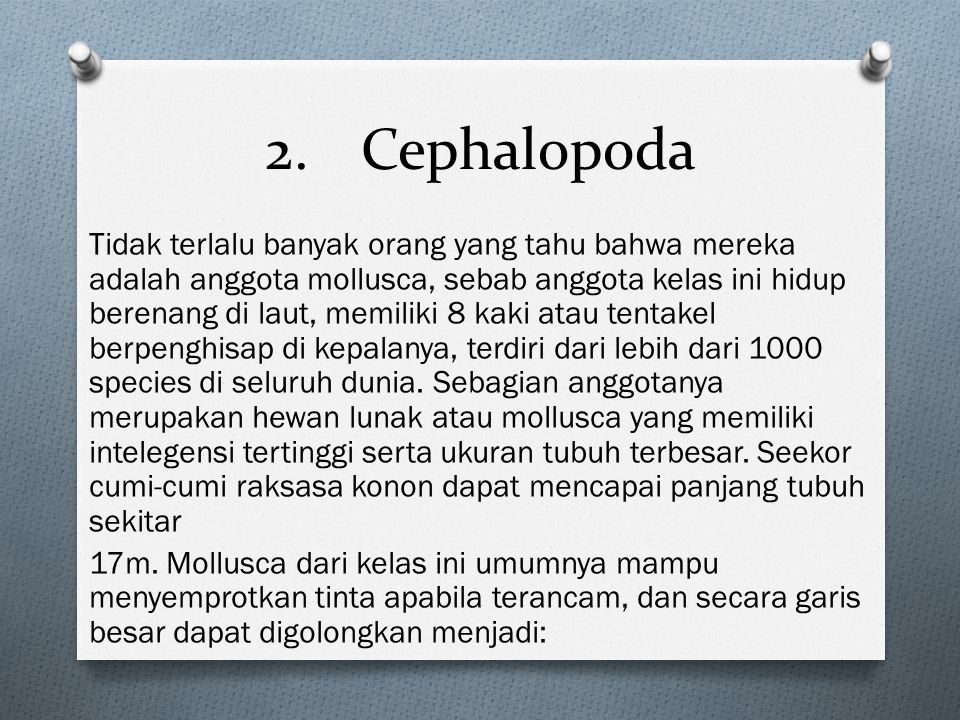 2. Cephalopoda