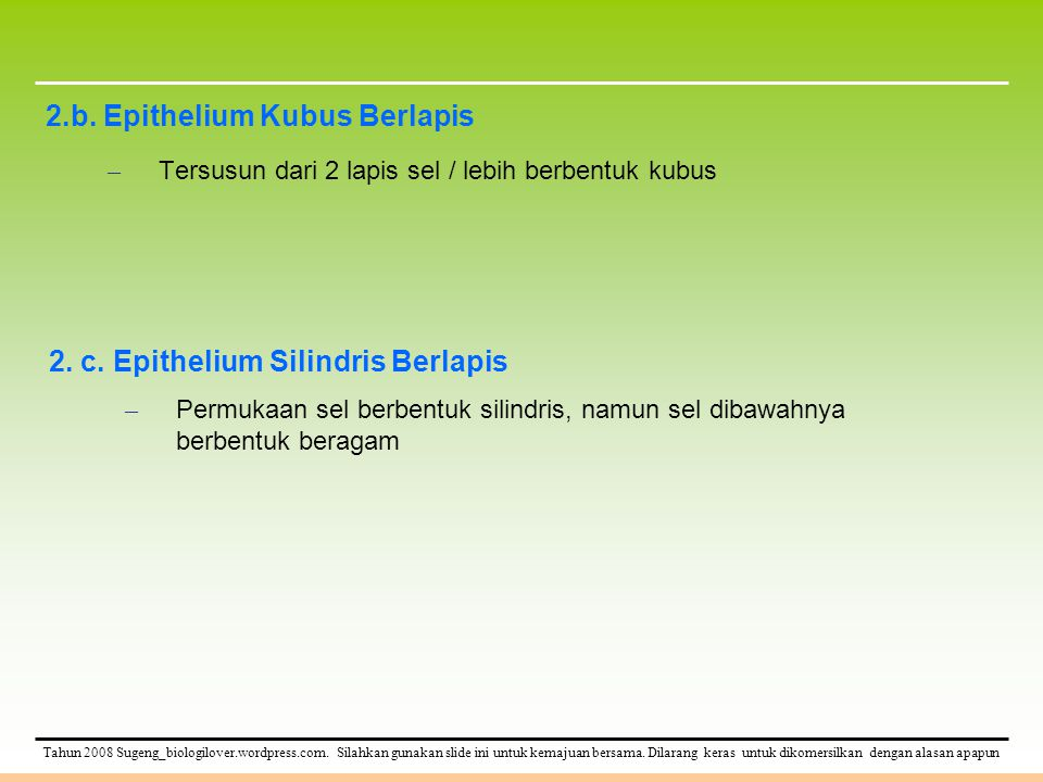 2.b. Epithelium Kubus Berlapis