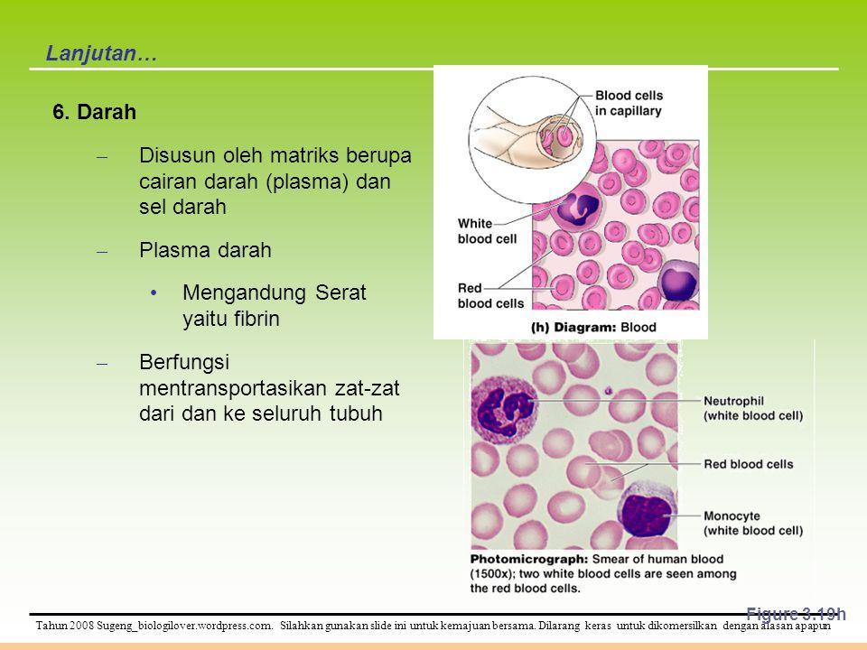Disusun oleh matriks berupa cairan darah (plasma) dan sel darah