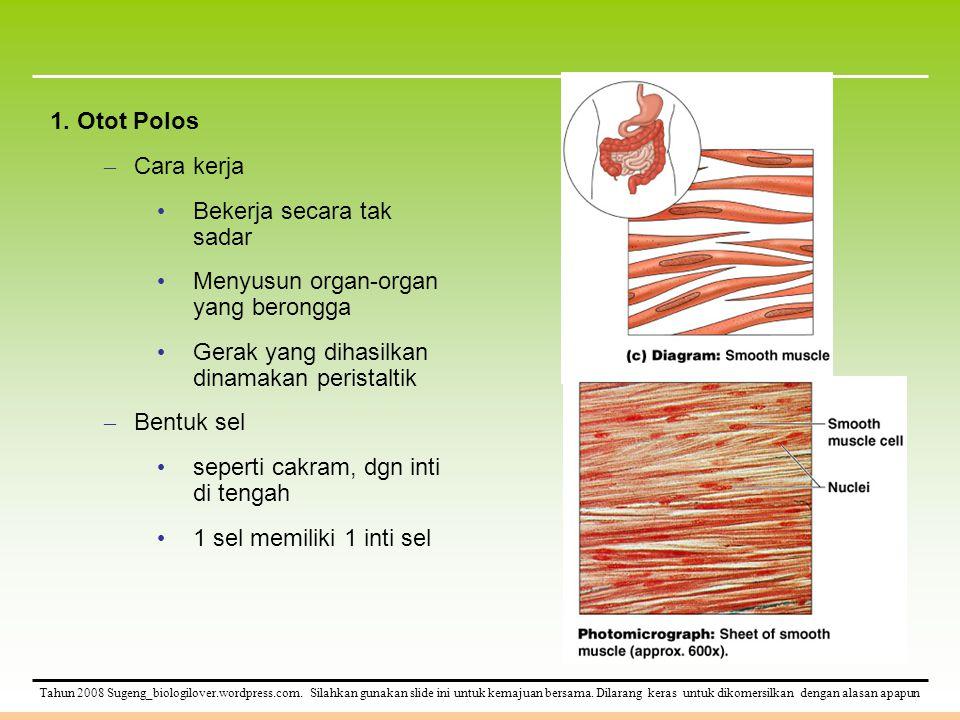 1. Otot Polos Cara kerja. Bekerja secara tak sadar. Menyusun organ-organ yang berongga. Gerak yang dihasilkan dinamakan peristaltik.