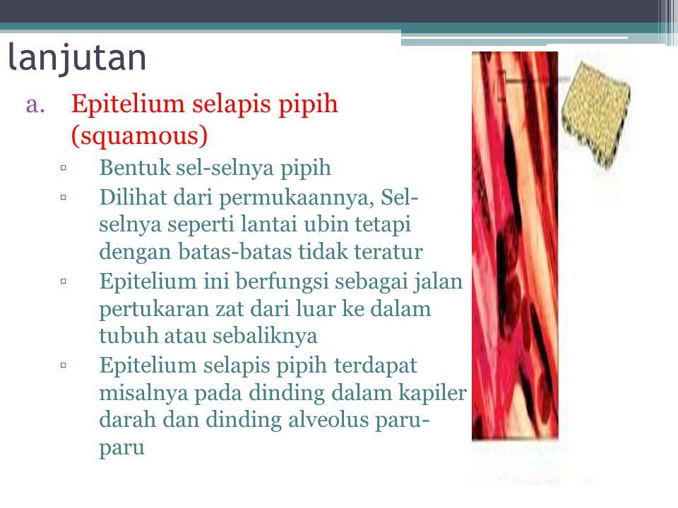 lanjutan Epitelium selapis pipih (squamous) Bentuk sel-selnya pipih