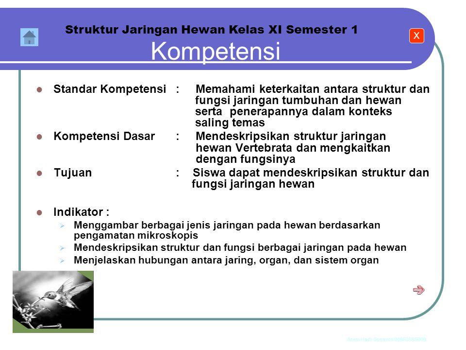 Kompetensi Struktur Jaringan Hewan Kelas XI Semester 1