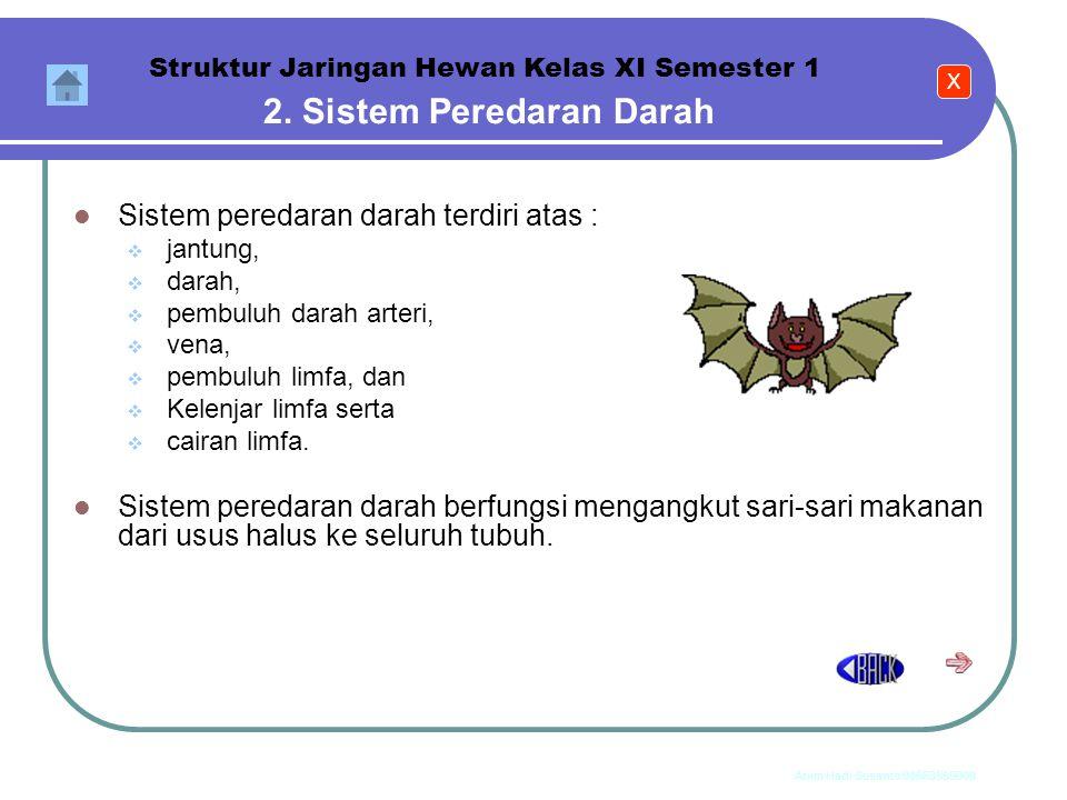 2. Sistem Peredaran Darah