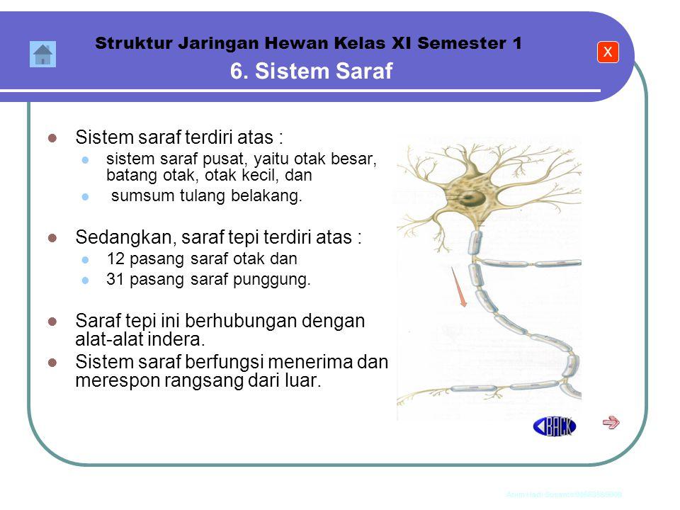 6. Sistem Saraf Sistem saraf terdiri atas :