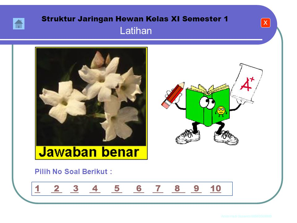 Struktur Jaringan Hewan Kelas XI Semester 1