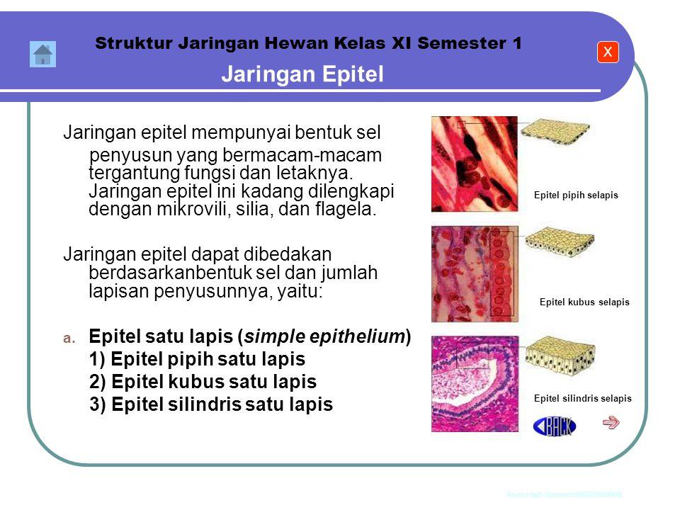Jaringan Epitel Jaringan epitel mempunyai bentuk sel