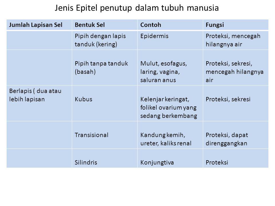 Jenis Epitel penutup dalam tubuh manusia
