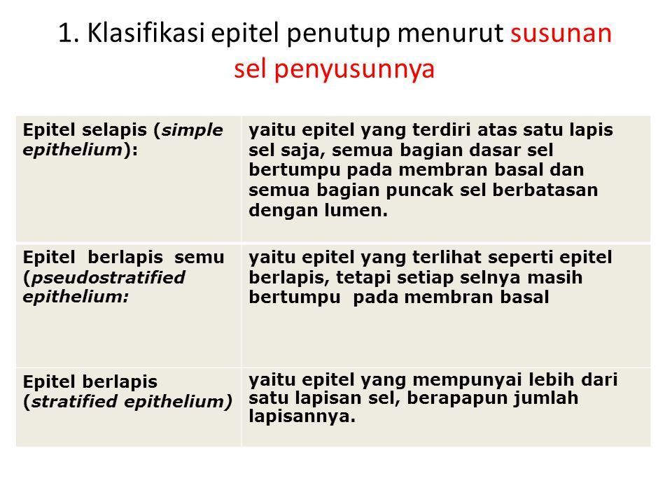 1. Klasifikasi epitel penutup menurut susunan sel penyusunnya