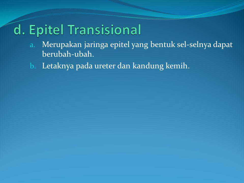 d. Epitel Transisional Merupakan jaringa epitel yang bentuk sel-selnya dapat berubah-ubah.