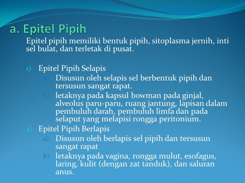 a. Epitel Pipih Epitel pipih memiliki bentuk pipih, sitoplasma jernih, inti sel bulat, dan terletak di pusat.