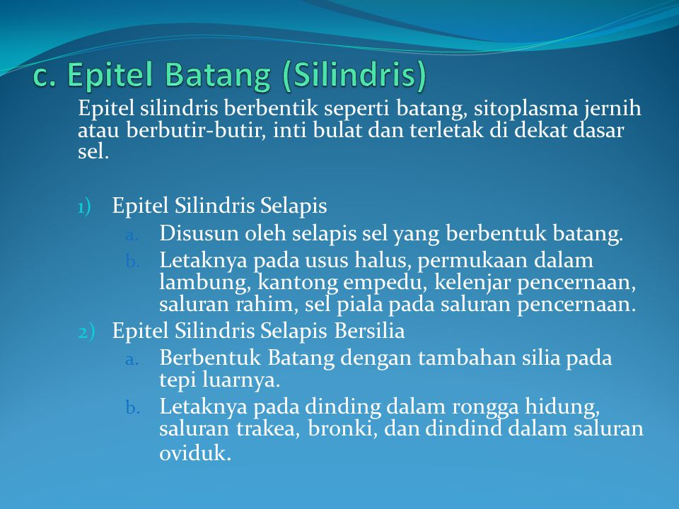 c. Epitel Batang (Silindris)