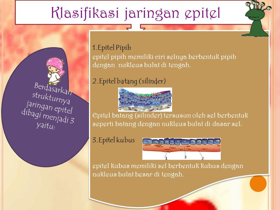 Klasifikasi jaringan epitel