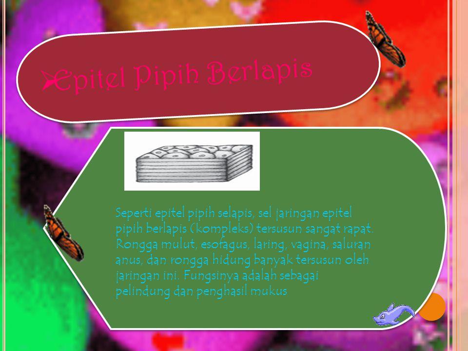 Epitel Pipih Berlapis